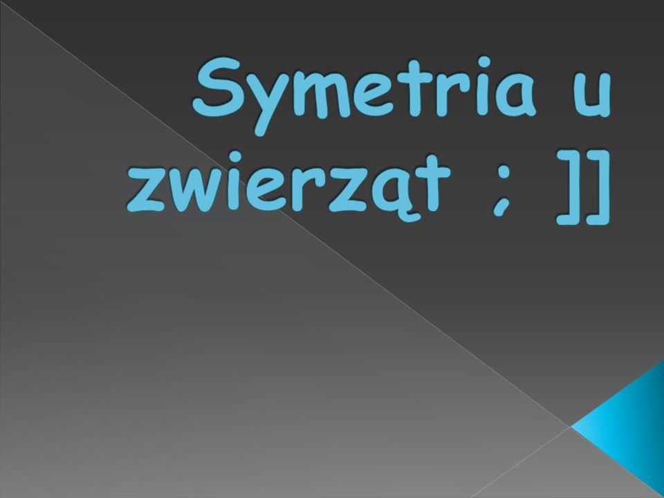 Symetria u zwierząt ; ]]